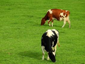 Dagtocht Tour de boer met rondvaart en melk-drive