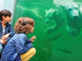 Ouwehands ijsberen