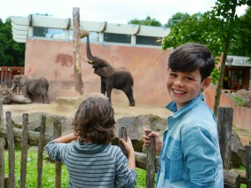 Ouwehands olifanten