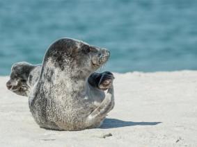 Dagtocht Zeehondensafari Zeeland