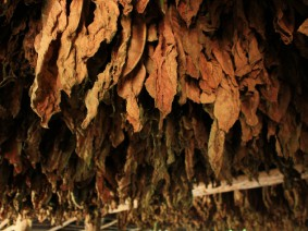 busreis sigarenmakerij