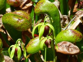 busreis hortus botanicus leiden