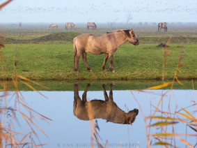 Dagtocht natuur in de Flevopolder