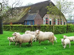 busreis boerderijmuseum de bovenstreek