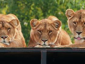 schoolreis safaripark beekse bergen