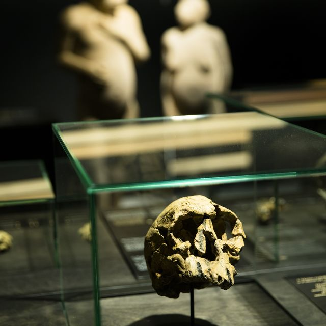 Gallery of Humankind - Our evolution, our body :: © rbins