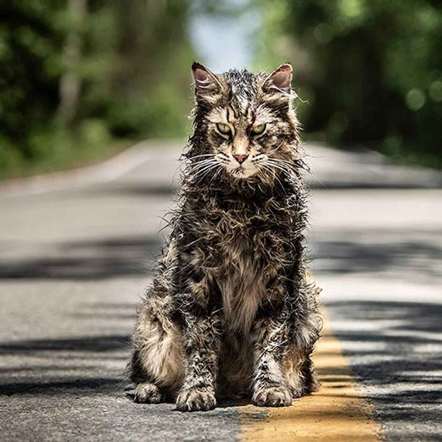 Obscure Night: Pet Sematary - VF