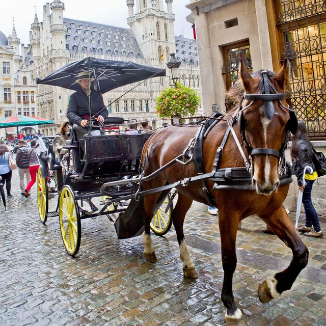Carriage Tours in Brussels