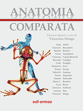 Aantomia Comparata