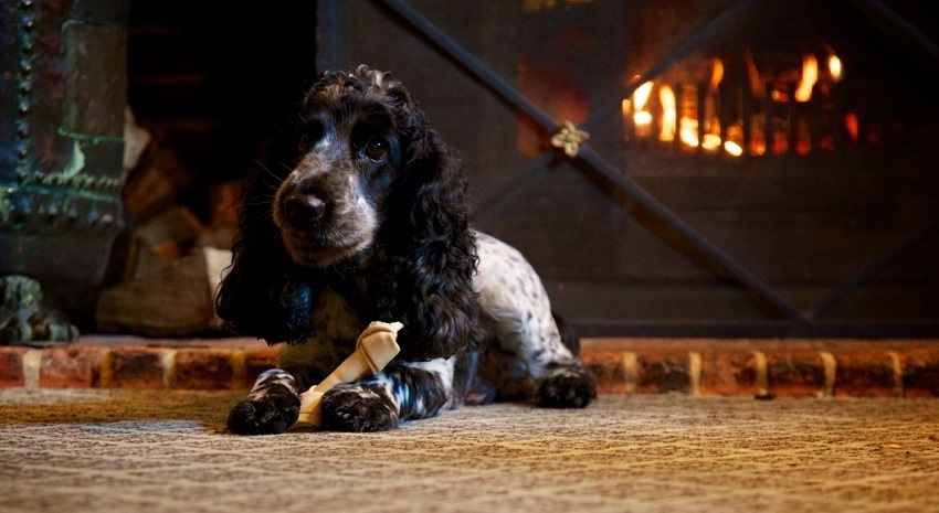 57d3a36741e4 Dogs are welcome to join you in both the lounge at The Swan at Lavenham