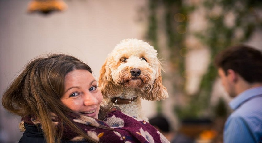 aa88a8114914 Stay in the stunning surroundings of The Ickworth Hotel and dogs will love  exploring the 1