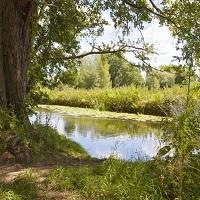 Bioblitz and Nature Day at Clare Castle Country Park