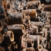 Make Bug Hotels at Clare Castle Country Park