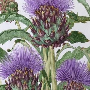 Exhibition: Floral Art – Reawakening