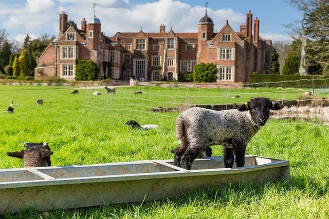 Lambing and Spring Bulbs - Gardens Open at Kentwell Hall - March 30 & 31