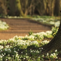 A Vision of White - Exploring Ickworth's Snowdrops
