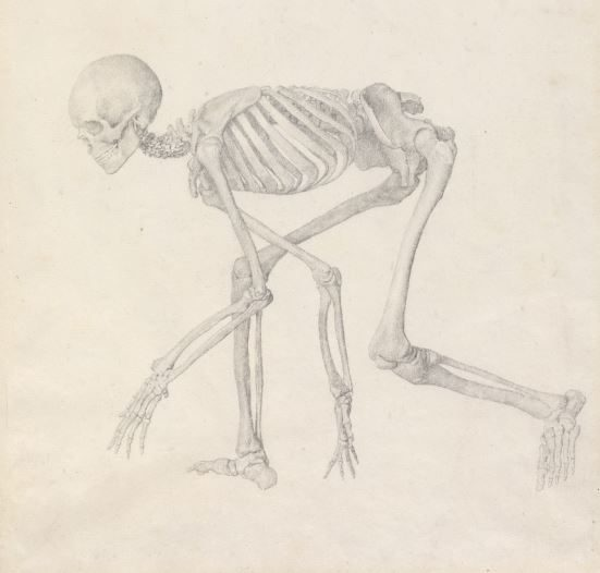 Exhibition: Stubbs (1724-1806) Anatomist