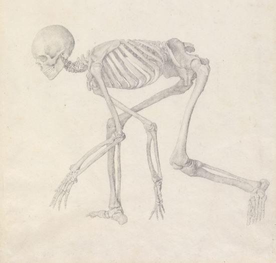 Exhibition: Stubbs (1724-1806) Anatomist