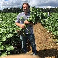 Prepare for a Sunflower Spectacular at Rougham Estate