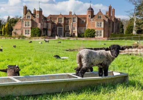 Lambing and Spring Bulbs - Gardens Open at Kentwell Hall - March 2 & 3