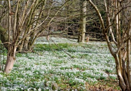 Snowdrops and Spring Bulbs at Kentwell Hall - February 16-24