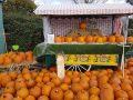 Pumpkin Patch Open Weekend