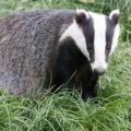 Webinar: Recognising mammal tracks and signs with Suffolk Wildlife Trust