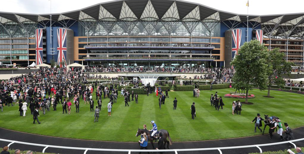 ascot races betting odds