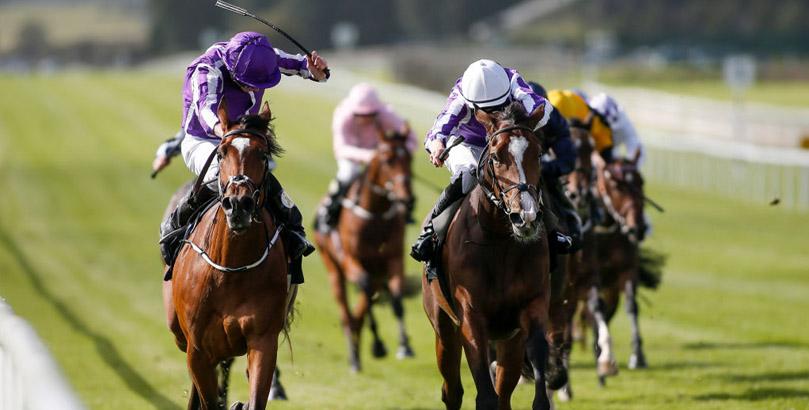 Breeders' Cup 2020 tips, horse racing