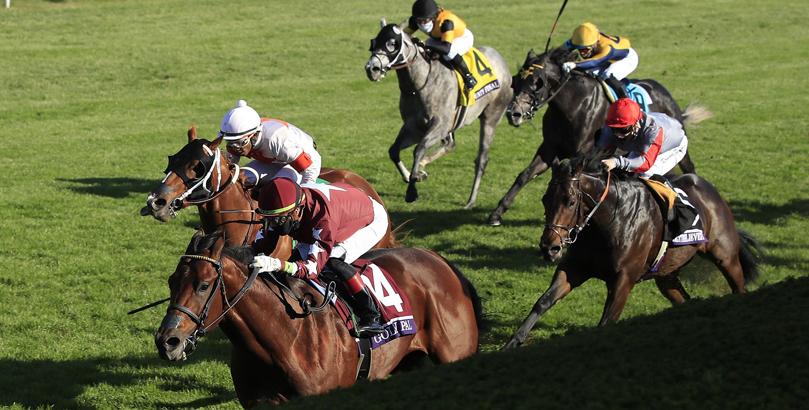 York races tips, horse racing