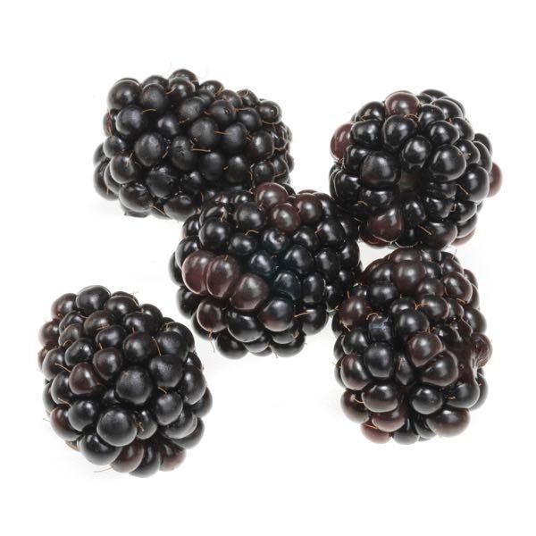 best berry recipes berryworld