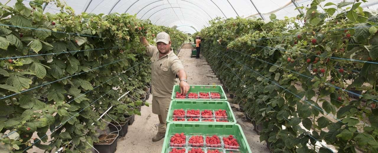 BerryWorld Australia on track for expansion
