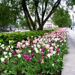"""Beplantning ved """"Synken"""" på Rådhusplassen"""