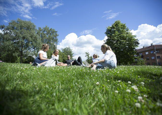 Nyt oasen Kampen park