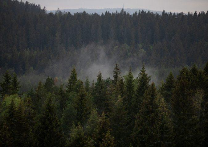 Hengekøye på Årvollåsen