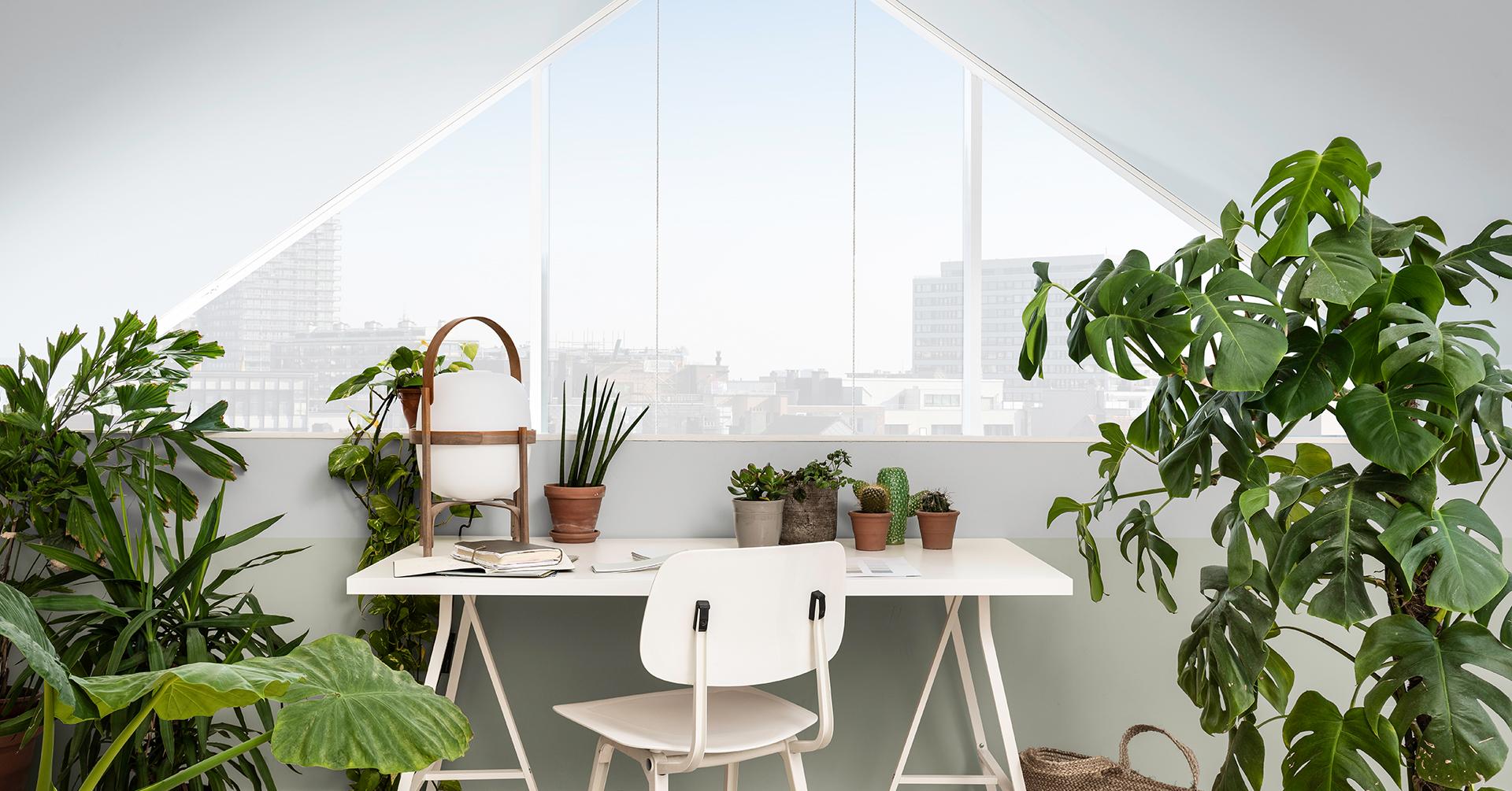 Planten doen het goed in lichte interieurs!