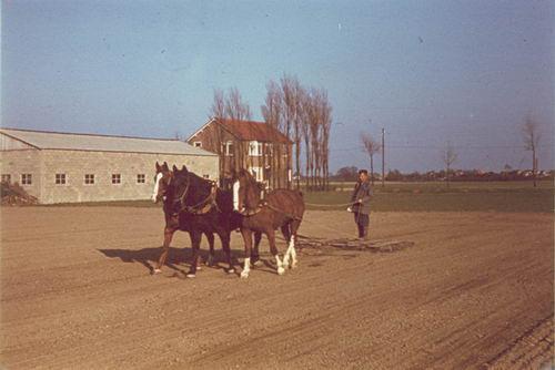 Aalsmeerderweg W 0675 19__ Jo de Groot Eggen met Paarden