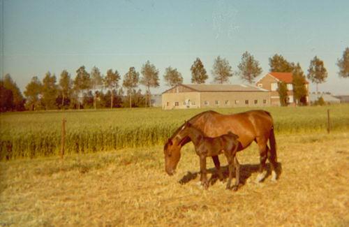 Aalsmeerderweg W 0675 19__ Paarden Jo de Groot_2