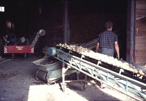 Aardappeloogst 197_ bij Geertzema 08