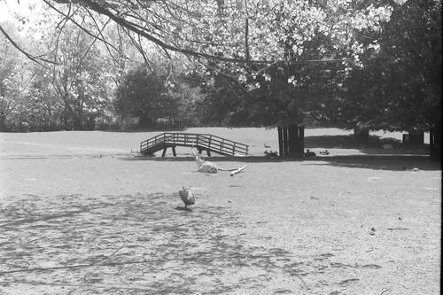 Boslaan 0000 Wandelpark 1979 Hertenkamp