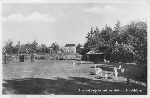 Boslaan Wandelpark 1952