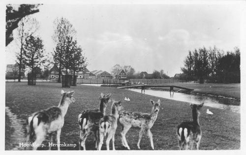 Boslaan Wandelpark 1955 Hertenkamp