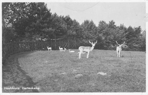 Boslaan Wandelpark 1955 Hertenkamp 02