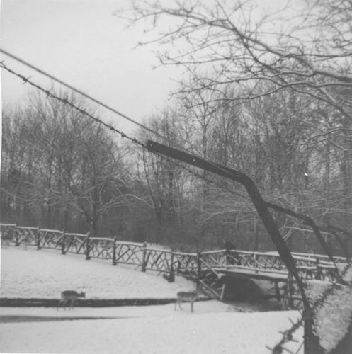 Boslaan Wandelpark 195_ in de Sneeuw 01