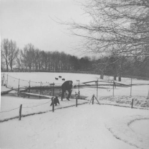 Boslaan Wandelpark 195_ in de Sneeuw 04