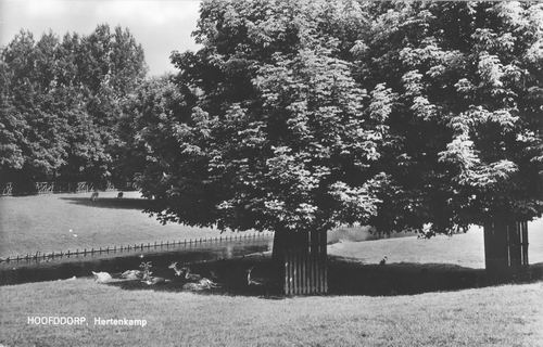 Boslaan Wandelpark 1966 Hertenkamp