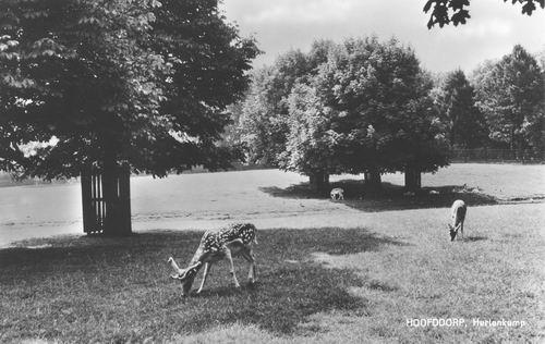 Boslaan Wandelpark 1969 Hertenkamp