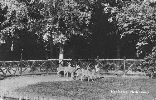 Boslaan Wandelpark 1970 Hertenkamp