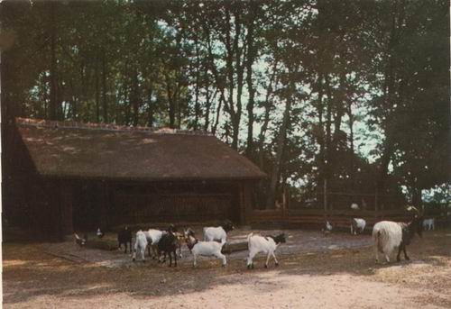 Boslaan Wandelpark 1974 Geiten bij Stal kleur 01