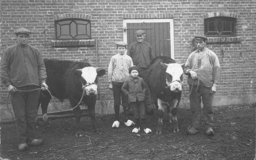 IJweg O 1624 1915± fam v Elderen met Stieren naast Schuur.jpg